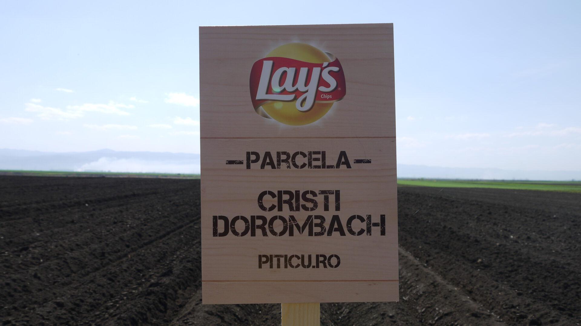 De ce am plantat cartofi