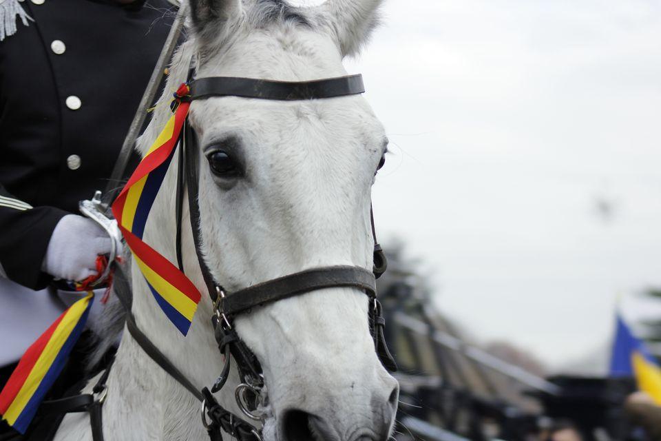 Parada militara 1 decembrie 2012 ziua romaniei bucuresti (3248)