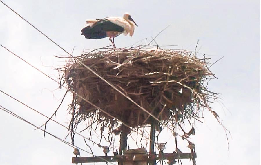 Drama in lumea ornitologilor, o barza si-a parasit femela