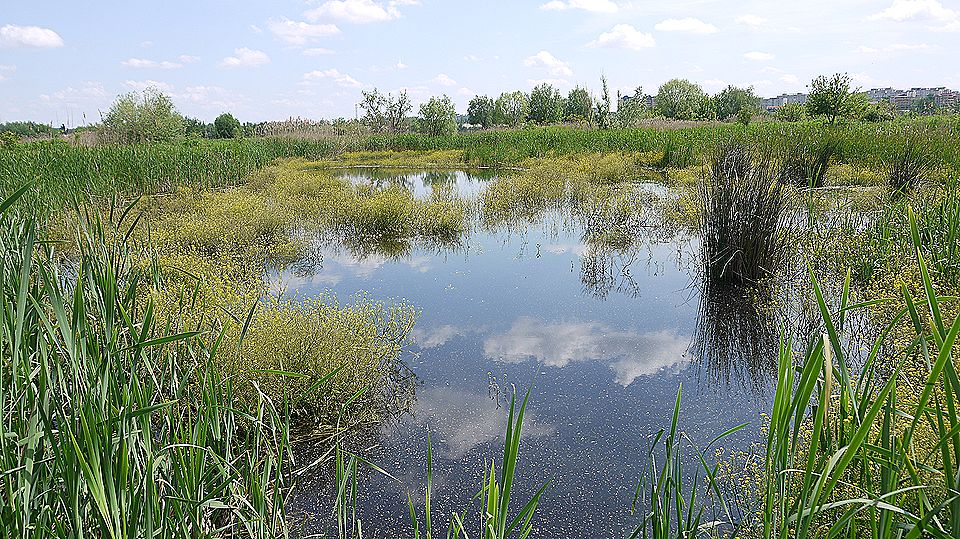 delta bucuresti - lacul vacaresti (480)